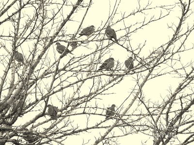 Flock Of Bird Photograph - A Mourning Of Doves by Joe Jake Pratt