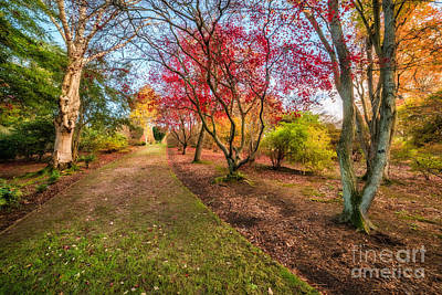 A Path Into Autumn Print by Adrian Evans