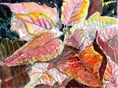 Peach Drawing - A Peach Of A Poinsettia by Mindy Newman