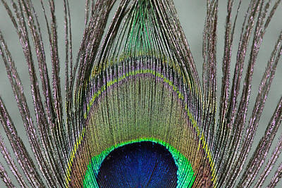 Peacock Photograph - A Peek At A Peacock Feather by Angela Murdock