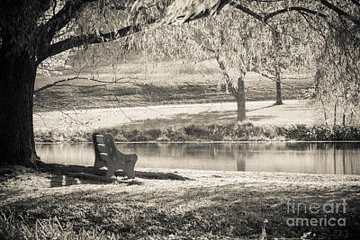 Willow Lake Photograph - A Place To Rest by Ana V Ramirez