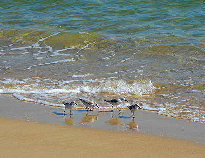 Shells Photograph - A Quartet Of Sandpipers At Water's Edge by Carla Parris