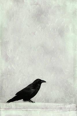 Blackbirds Photograph - A Raven by Priska Wettstein