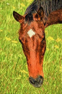 A Real Star In The Pasture Print by Sandi OReilly