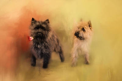 Cairn Terrier Photograph - A Rose For My Love by Jai Johnson