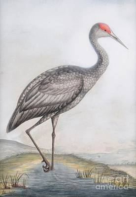 Spoonbill Painting - a Sandhill Crane by MotionAge Designs