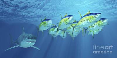 A School Of Yellowfin Tuna Is Followed Print by Corey Ford