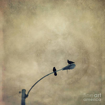 Raven Photograph - A Short Moment by Priska Wettstein