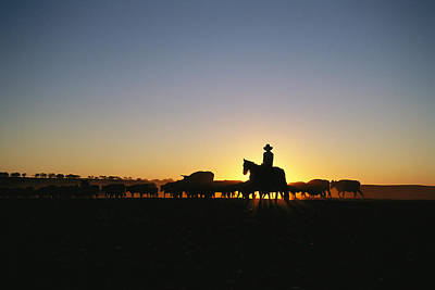 A Silhouetted Australian Cattle Rancher Print by Medford Taylor