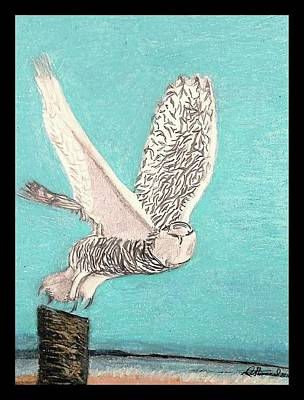 Portraits Drawing - A Snow Owl Takes Flight  by David Stannard