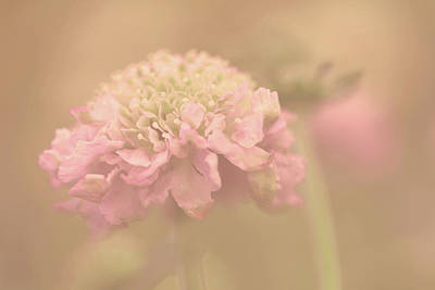 Pincushion Photograph - A Soft Touch  by Connie Handscomb