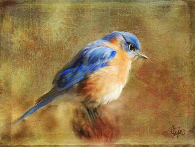 Bluebird Mixed Media - A Songbird In My Heart by Colleen Taylor