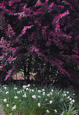 A Spectacular Springtime Original by Suzanne Gaff