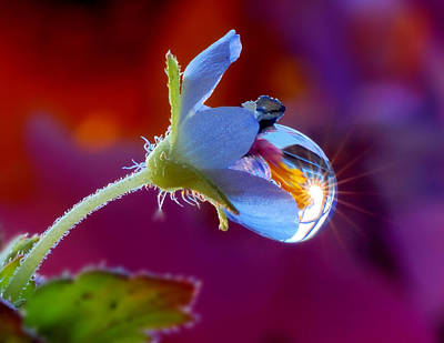 Natures Wonderful Colors Digital Art - A Sun Is In A Drop  by Yuri Hope