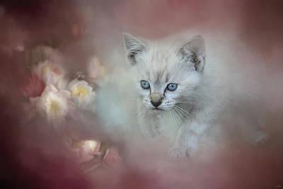 Kitten Photograph - A Sweet Moment 3 by Jai Johnson