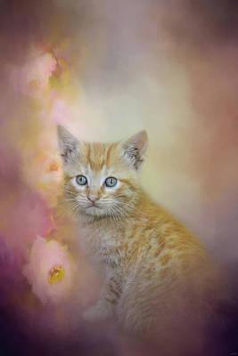 Kitten Photograph - A Sweet Moment by Jai Johnson