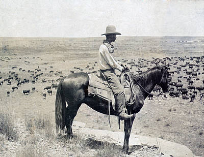 Cattle Drive Photograph - A Texas Cowboy On Horseback On A Knoll by Everett