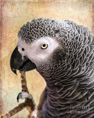 Parrot Digital Art - A Touch Of Grey 11 by Betty LaRue