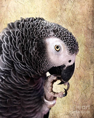 Parrot Digital Art - A Touch Of Grey by Betty LaRue