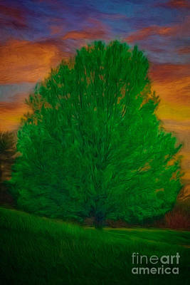 Manipulation Photograph - A Tree At Sunset by Tom York Images