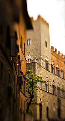 Sienna Italy Photograph - A Tree Grows by Marilyn Hunt