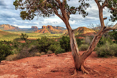 Cathedral Rock Photograph - A Tree In Sedona by James Eddy