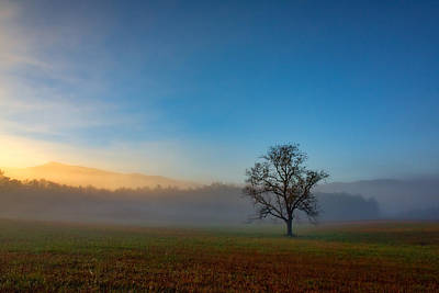 A Tree In The Mist In Cades Cove Print by Rick Berk