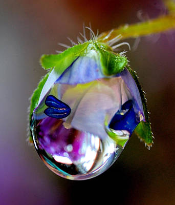Natures Wonderful Colors Digital Art - A Very Large Drop Of Rain On The Flower by Yuri Hope