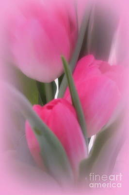 A Vision Of Pink Tulips Print by Kay Novy