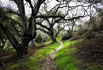 A Walk In The Woods Print by Joe Darin