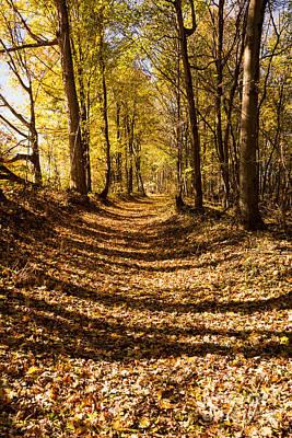 Natchez Trace Parkway Photograph - A Walk On The Old Trace - Natchez Trace by Debra Martz