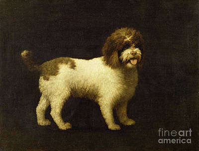 A Water Spaniel Print by George Stubbs