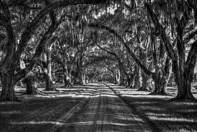 The Majestic Way Live Oaks Tomalley Plantation South Carolina Print by Reid Callaway