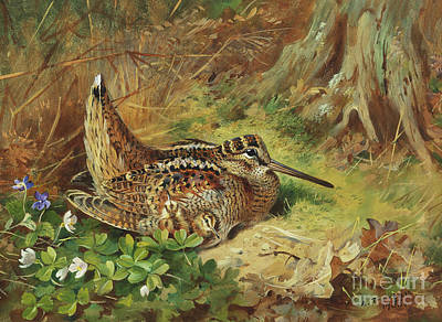 Woodcock Painting - A Woodcock And Chicks by Archibald Thorburn