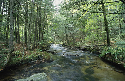 A Woodland View With A Rushing Brook Print by Heather Perry