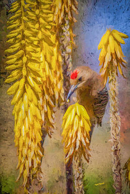 Aloe Painting - A Woodpecker In The Aloe by David Wagner