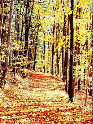 Finger Lakes Photograph - A Yellow Wood by Joshua House