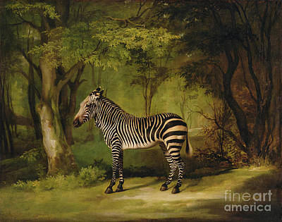 Animal Portrait Painting - A Zebra by George Stubbs