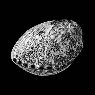 Abalone Sea Shell Print by Jim Hughes