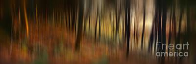 Autumn Landscape Photograph - Autumn Forest by Rod McLean