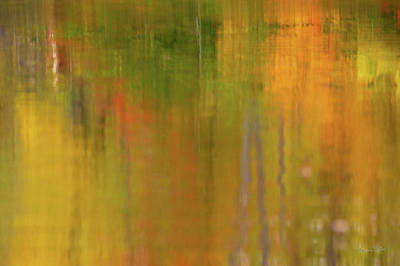 D700 Photograph - Abstract Autumn  by Gregory Ballos