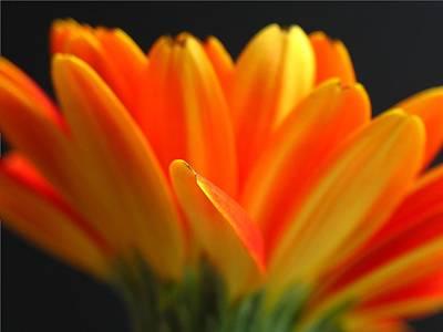 Flower Photograph - Abstract Gerbera Petals by Juergen Roth