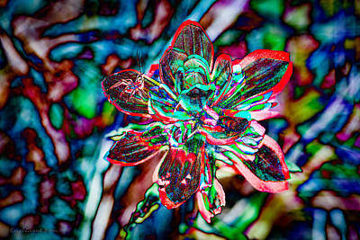 Insects Photograph - Texas Indian Paintbrush In Abstract by Erich Grant