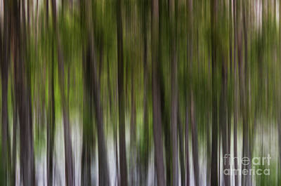 Abstract Trees Murfree Spring Wetlands Print by Photo Captures by Jeffery