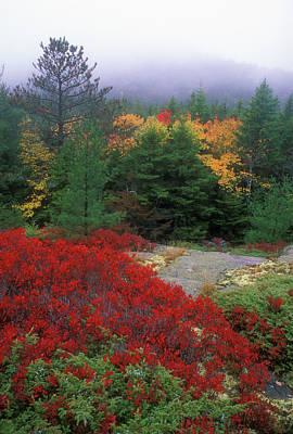 Acadia National Park Foliage Print by John Burk