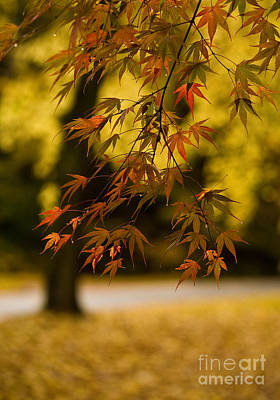 Macro Photograph - Acers Turning by Mike Reid