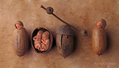 Acorns Print by Anne Geddes
