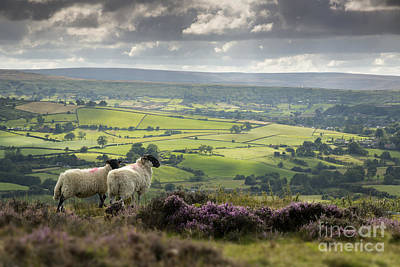Midge Photograph - Admiring The View by John Potter