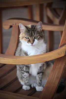 Companion Digital Art - Adorable Tabby Cat by Cynthia Guinn