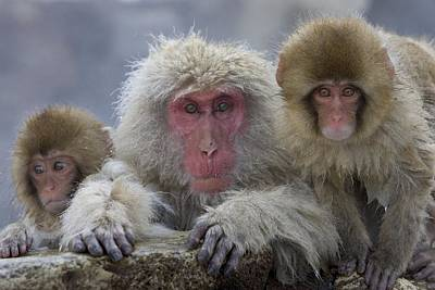 Natural Forces Photograph - Adult And Two Young by Roy Toft
